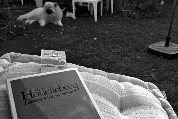 Houellebecq.