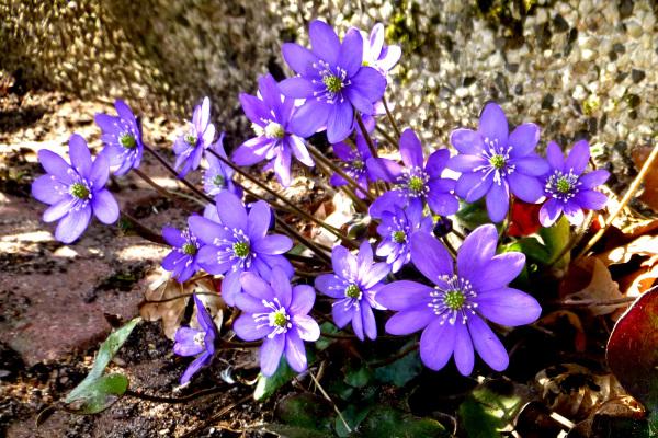 Asphalt flowers.