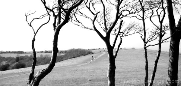 Downland and Trees #2