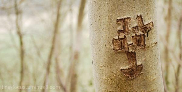 Tree Etching