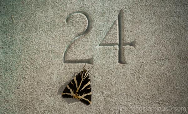 Moth No. 24!