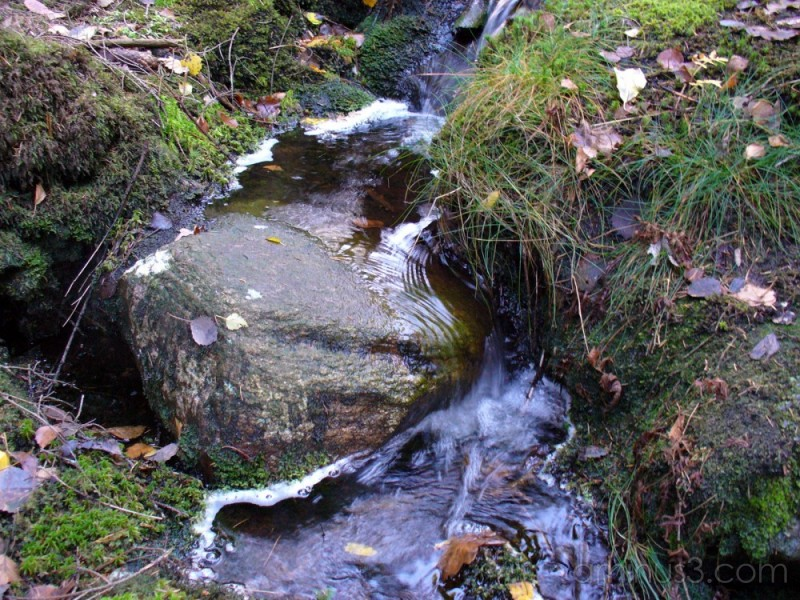 Forest Creek / Bäck i skogen