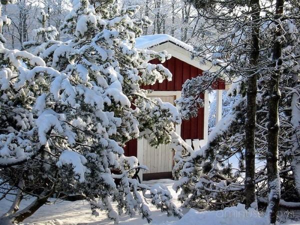 Winter 1 / Vinter 1