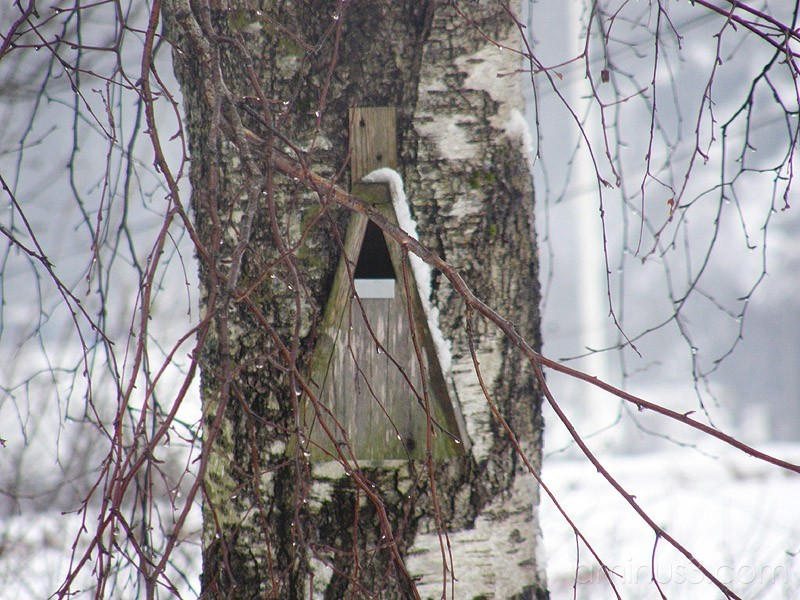 Nesting Box / Fågelholk
