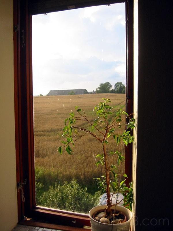 View From A Window 2 / Utsikt från ett fönster 2