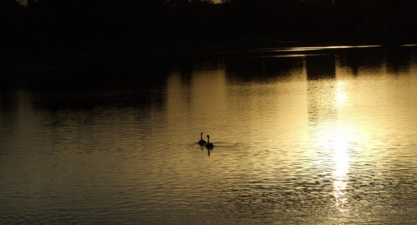 sunset with geese