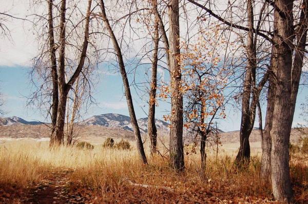 fall, tree