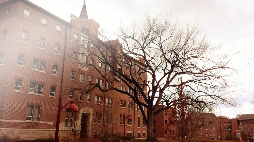 tree, university