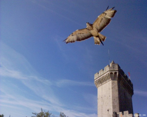 Les Aigles de Beaucaire