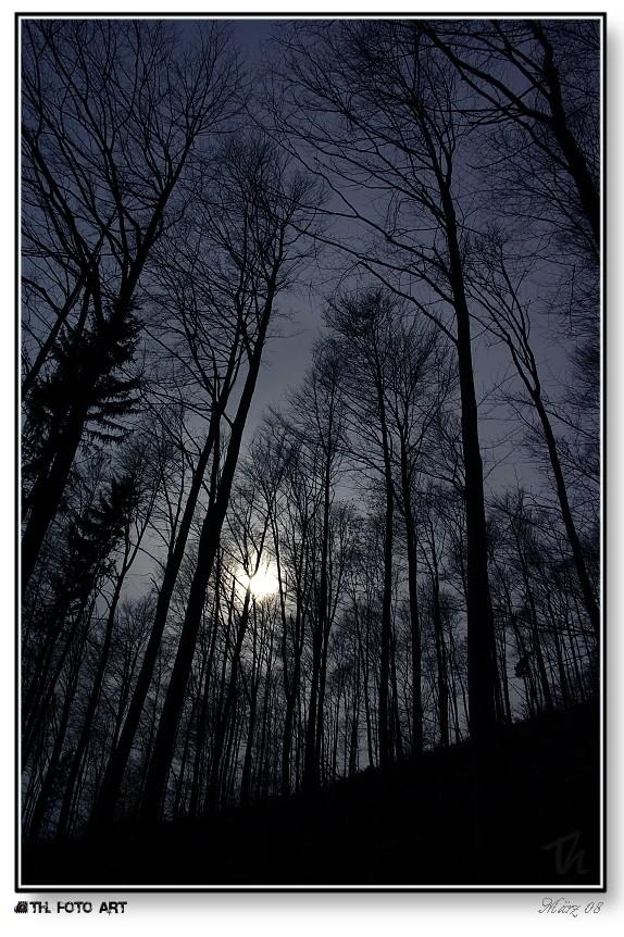 Geisterwald // haunted woods