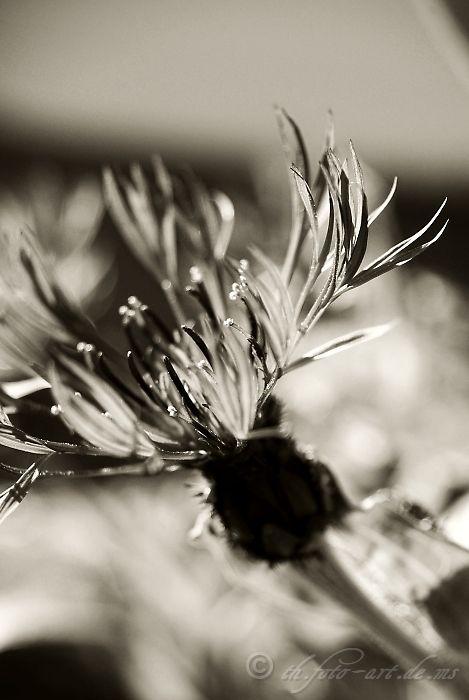 Blumen - monochrom I