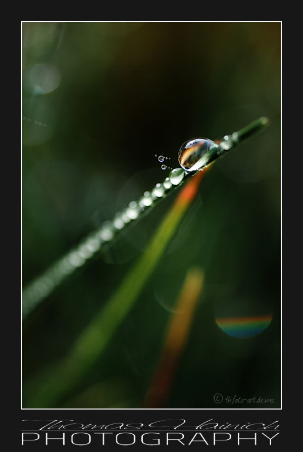 A pearl of morning dew #1