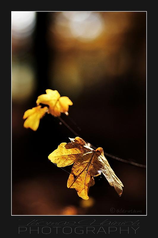 Herbstimpressionen #3