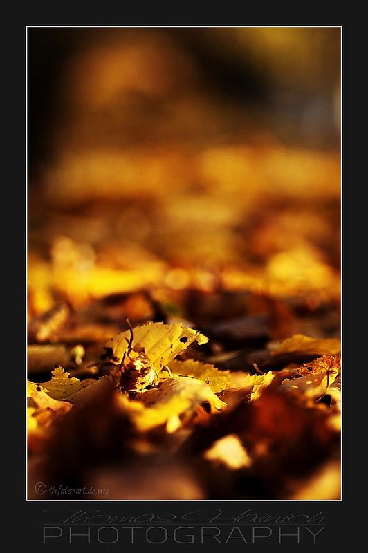 Herbstimpressionen #4
