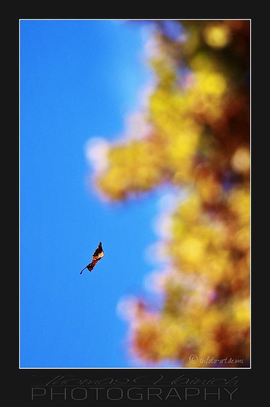 Herbstimpressionen #5