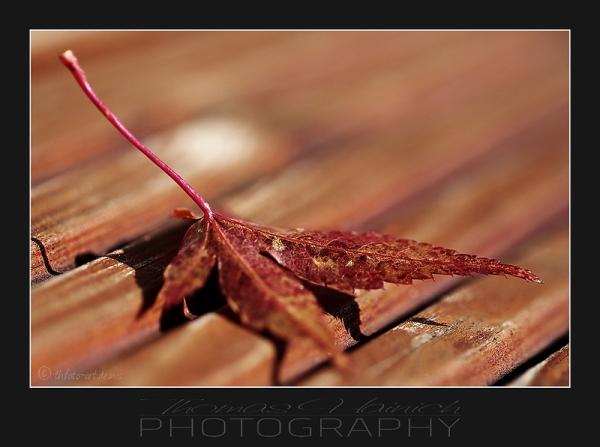 Herbstimpressionen #9
