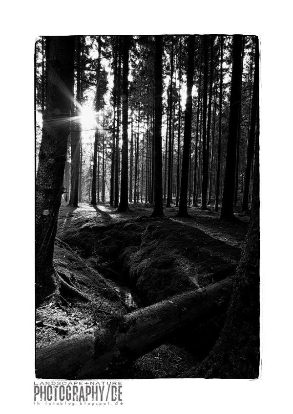 woodland II