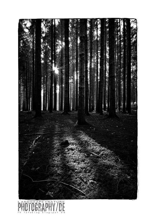 woodland IV