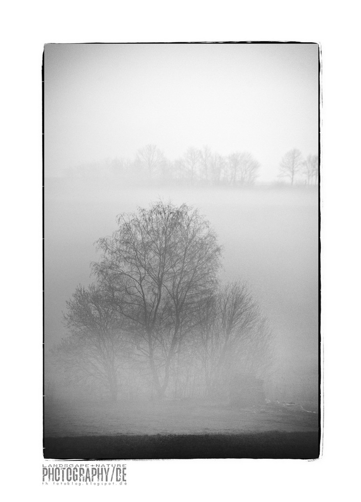 Tree in morning fog