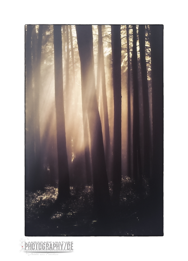 Sunrays in the woods