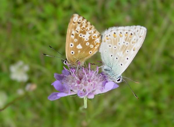 loving butterflies