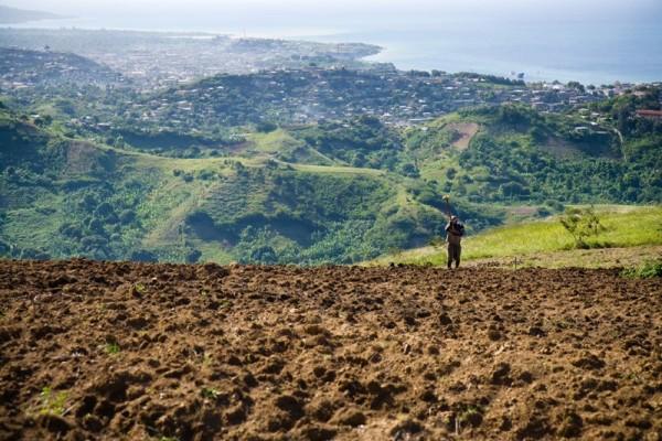haiti man in field