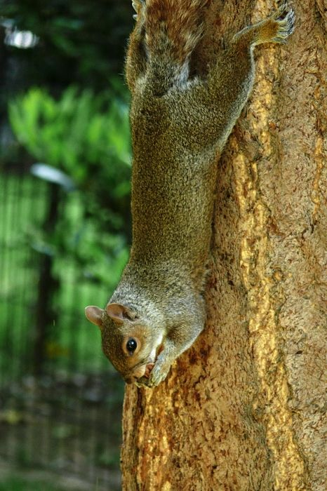 New York squirrel écureuil street