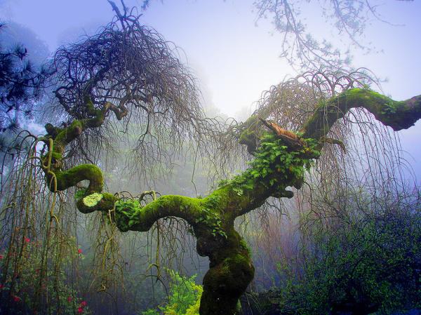 Heaven's garden IV