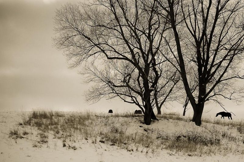Winter in the Pasture