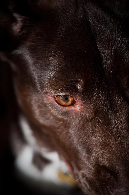 Maya's Eye