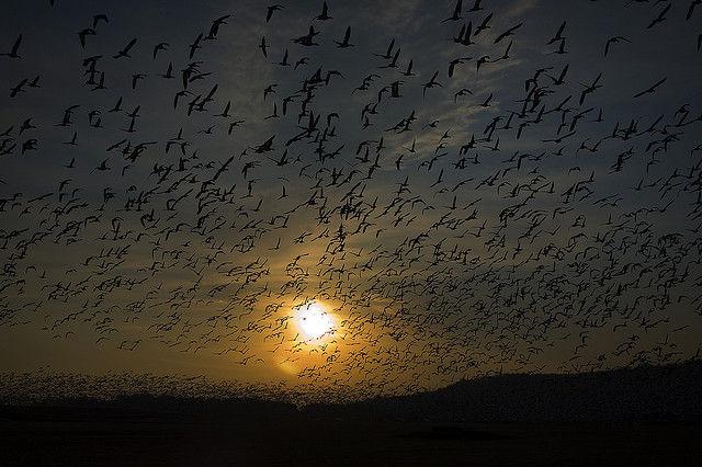 Bird Migration...coming soon!