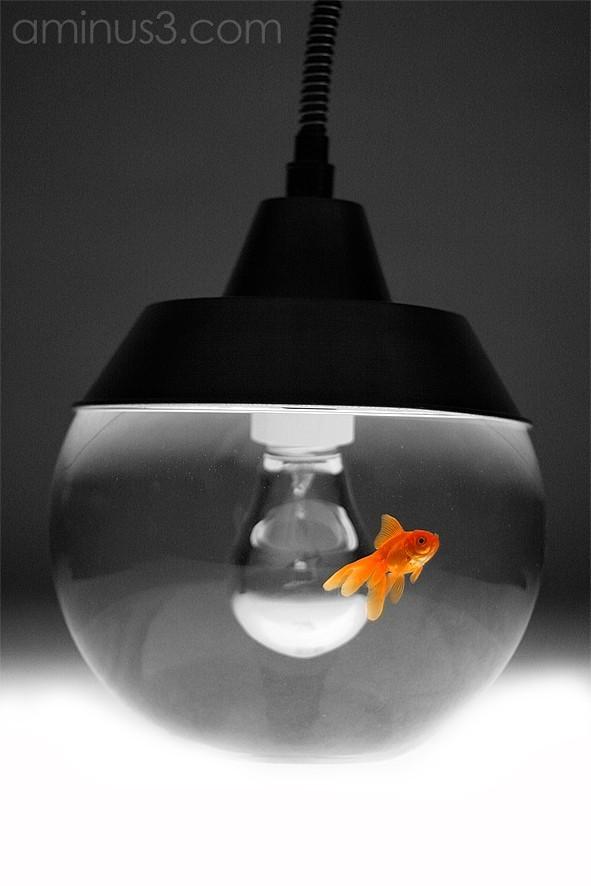 pez rojo en lámpara
