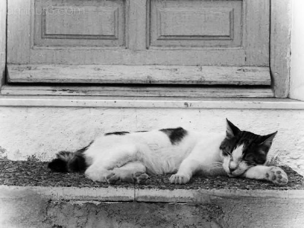 el gato valenciano