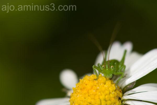 micro grasshopper