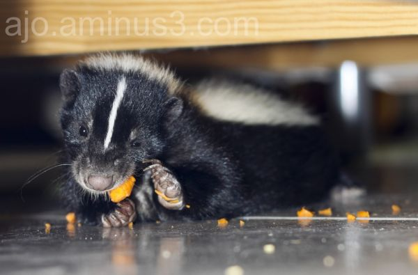 Frida eating