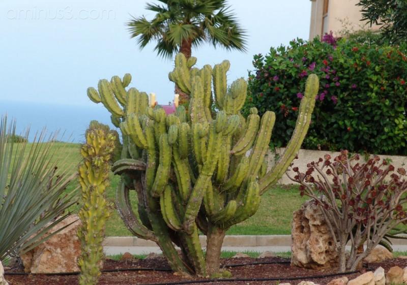 Cactus in Spain