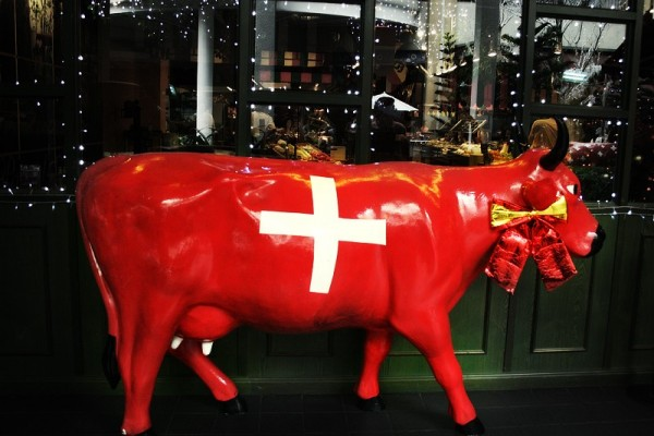 Red Swiss cow