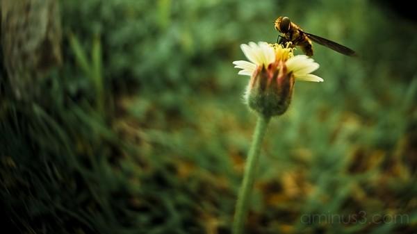 Nikon D70s,Bee,Fisheye