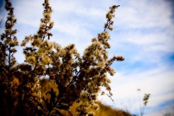 Weeds II