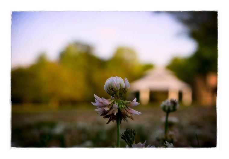 park flora