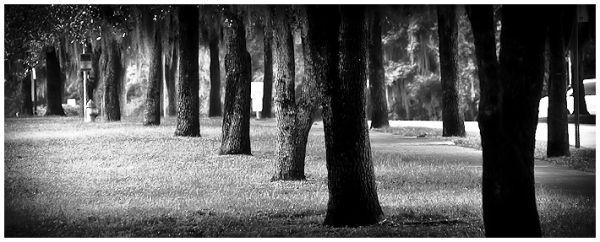 hampstead park v
