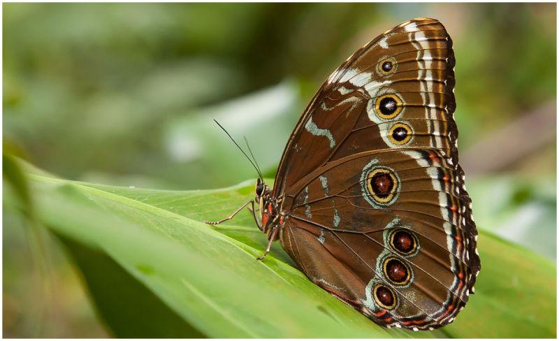 butterfly museum 12.18.10 ii