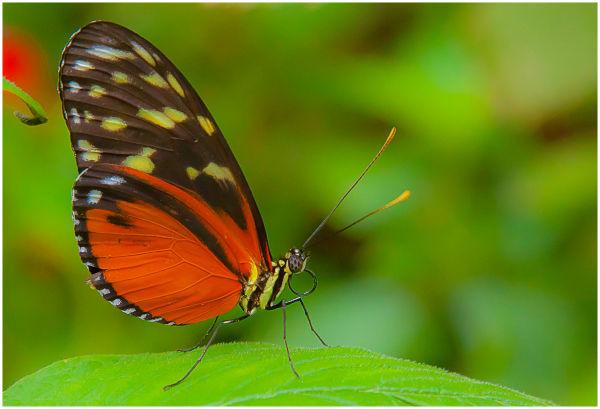 butterfly museum 12.18.10 iii