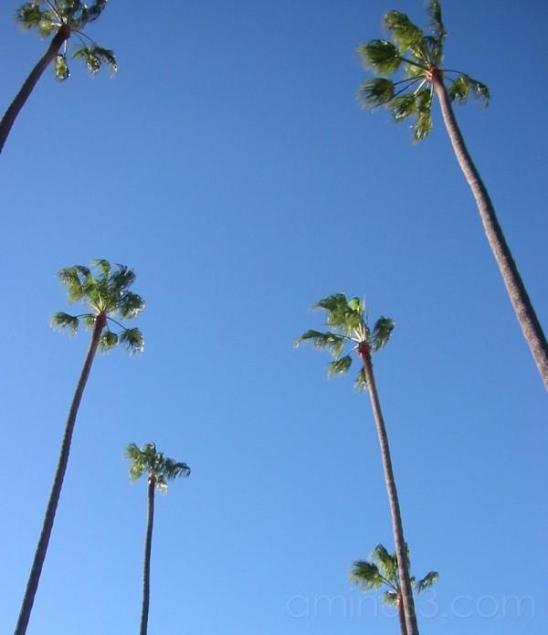 Palm Los Angeles United States America