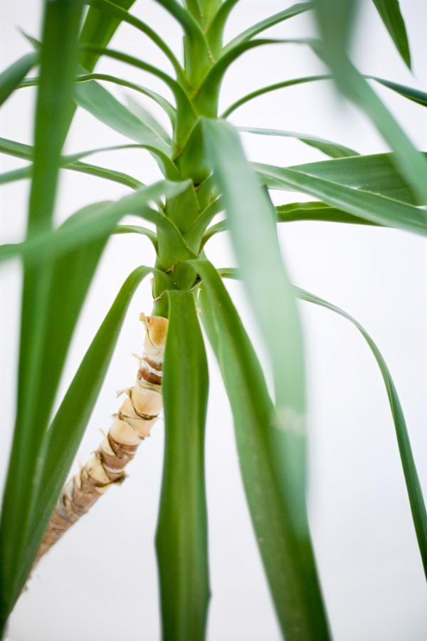 room plant austria 2007