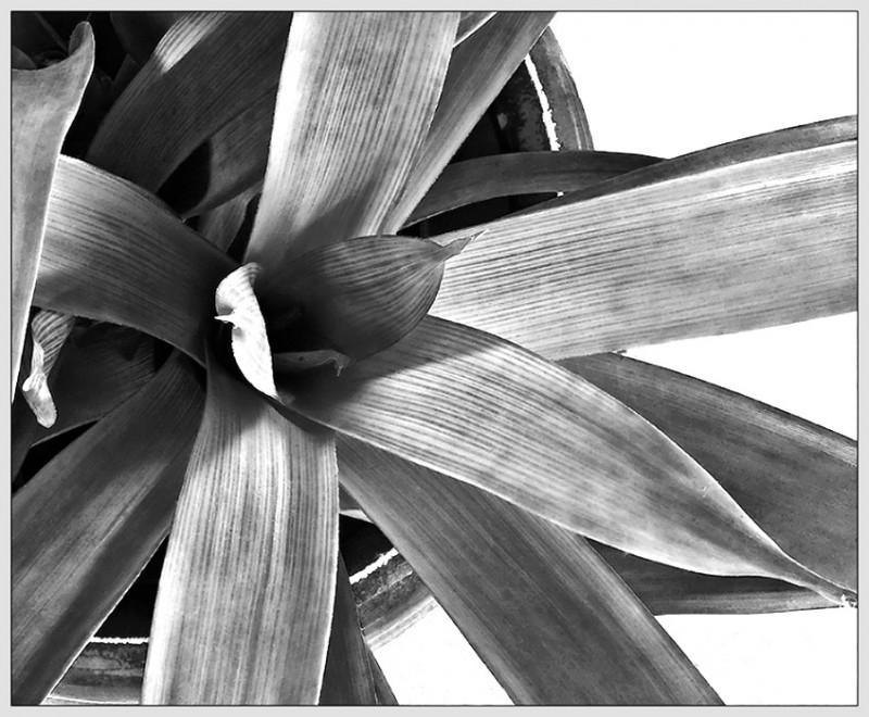 plant life - b & w