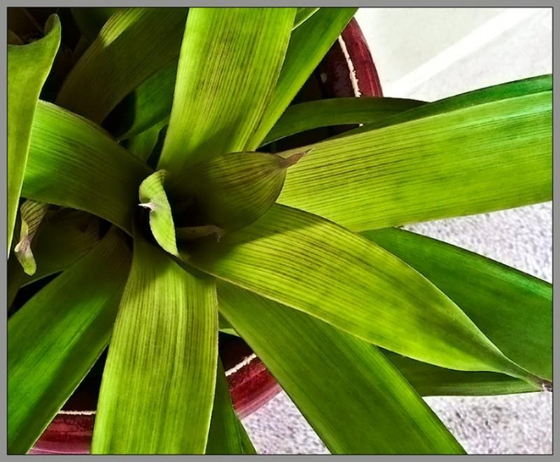 plant life - color