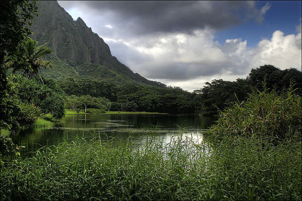 beneath the ko'olau mountains