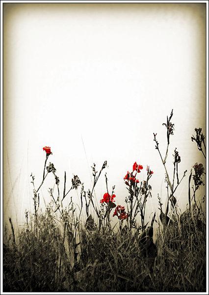 pond flowers