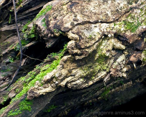 log and lichen